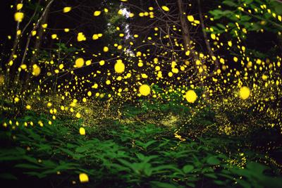 Lightning bugs fill the forest with a natural light show.
