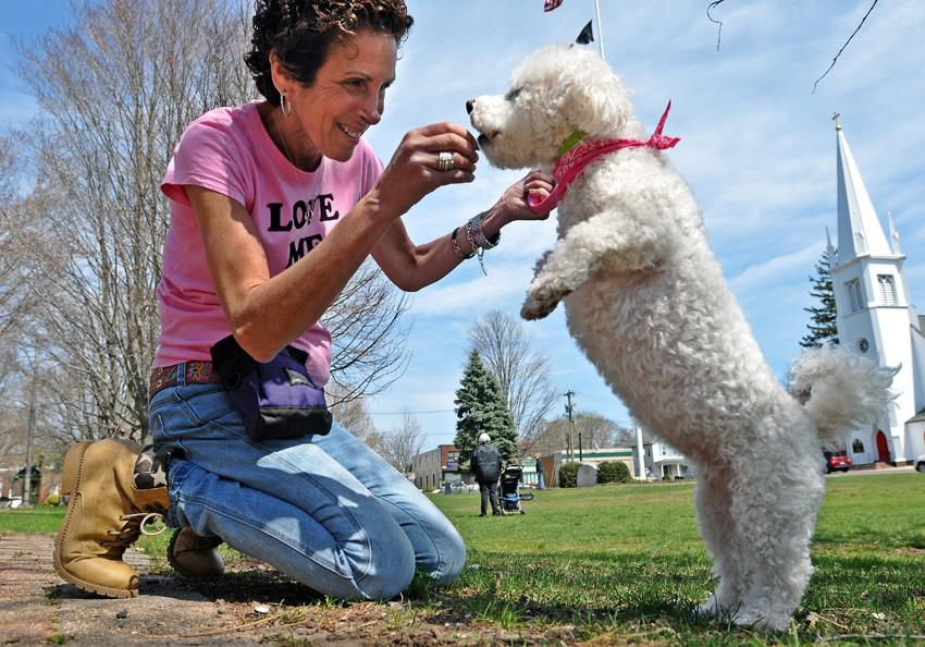 Healing Power, Love From Dogs Are Focus of Connecticut 'Dog Whisperer'