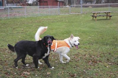 New 'bark park' serves more than just pet owners