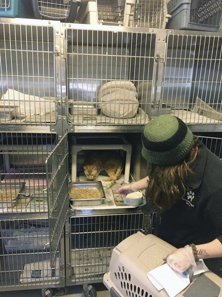 Area shelter takes in displaced NYC pets