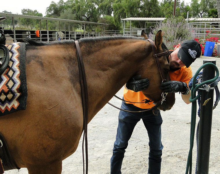 Equine Assisted Therapy ...