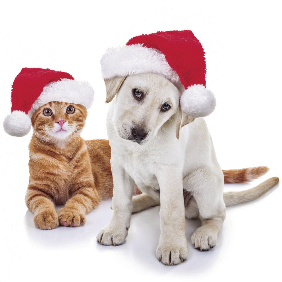 puppy for christmas do pets make a good gift news