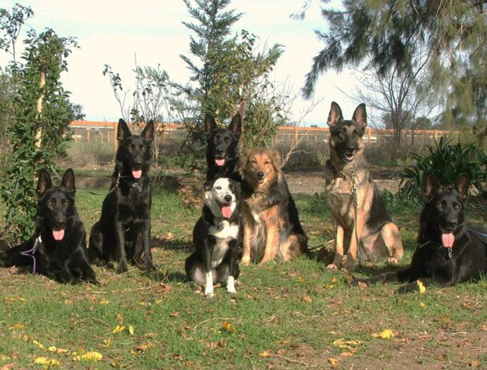 Business Spotlight Dragon Crest Dog Training Offers Classes In