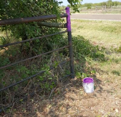 8-23-19 Purple Post.jpg