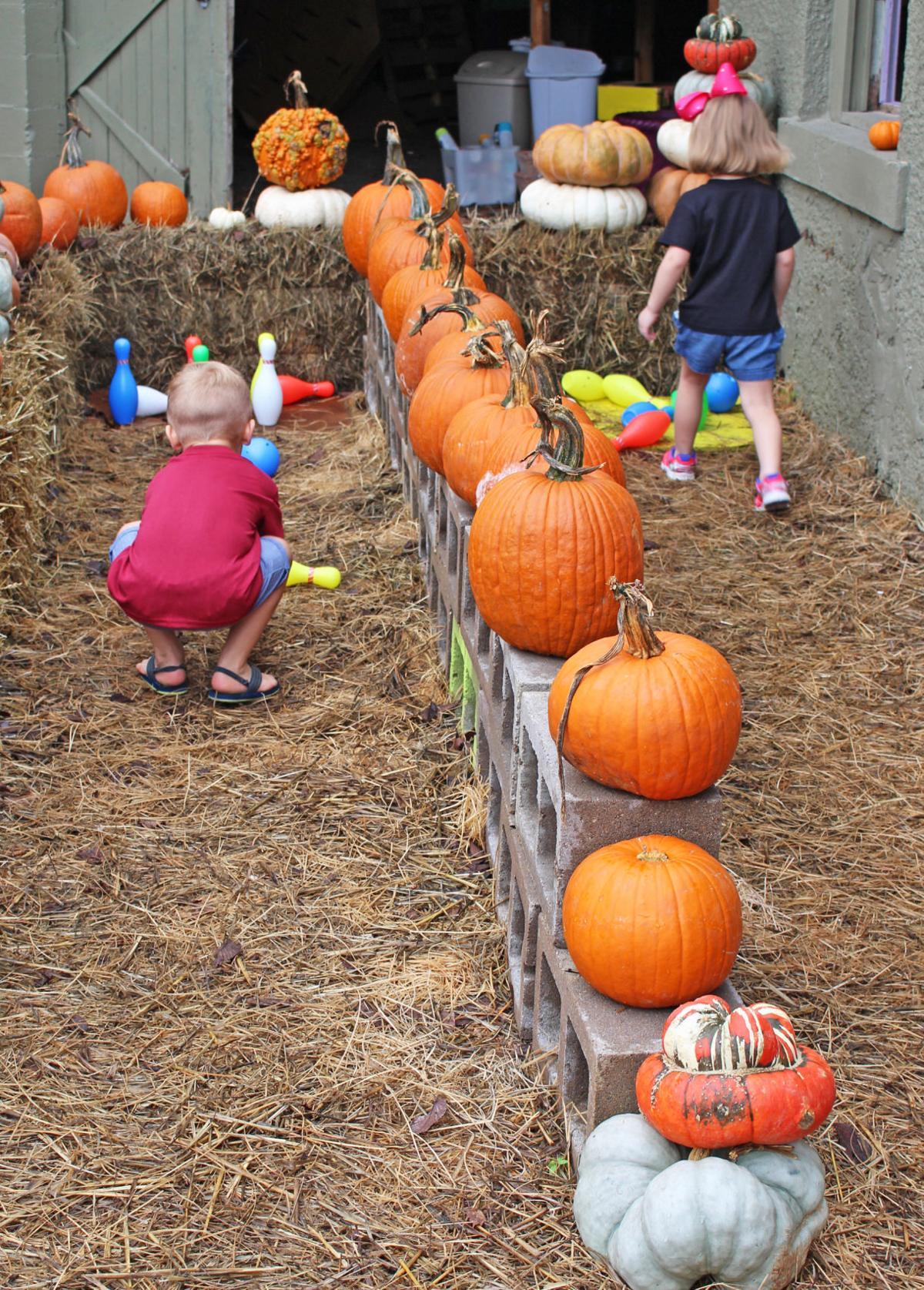 Pumpkin patch fun:The Square Root hosts City pumpkin patch   News ...