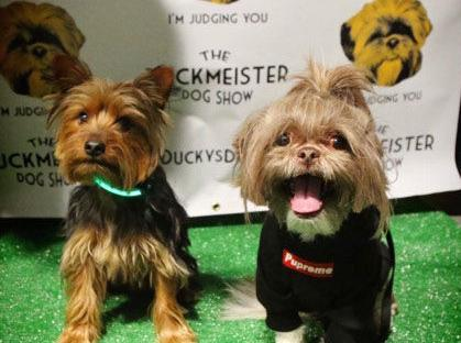 To feed our furry friends: Local dog show helps struggling pet owners