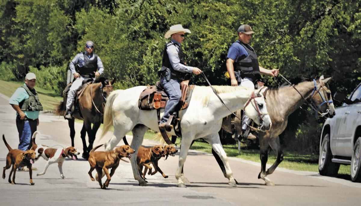 8-4-20 NCSO horses, dogs.JPG