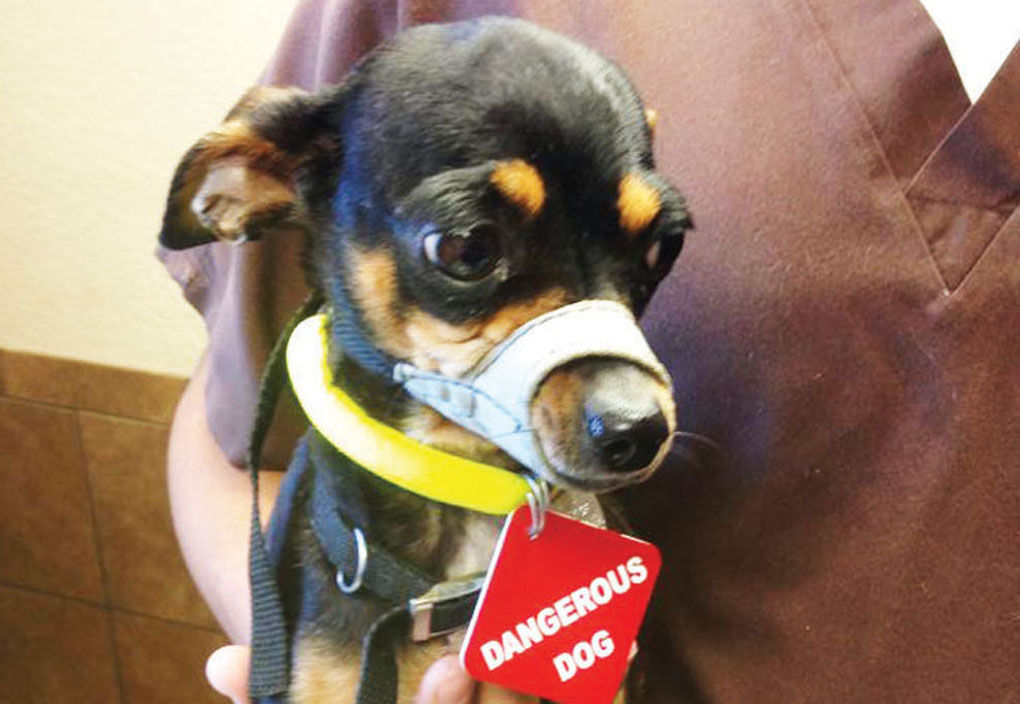 Chicago Animal Control Dog Bite
