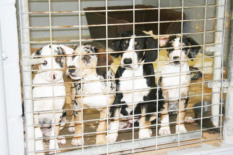 Local Animal Shelter Loses Source Of Donated Food News