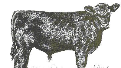 angus calf.gif