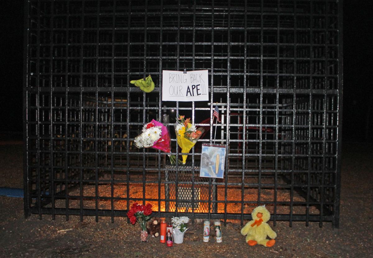 3-1-18 Gorilla memorial.jpg