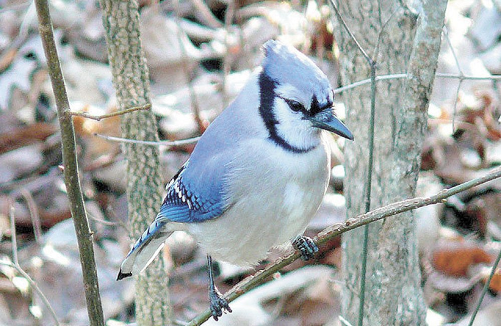 DNR monitoring reports of sick songbirds