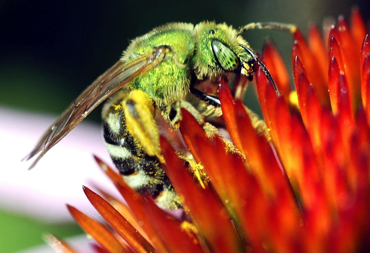 Robert Miller: A census for pollinating insects