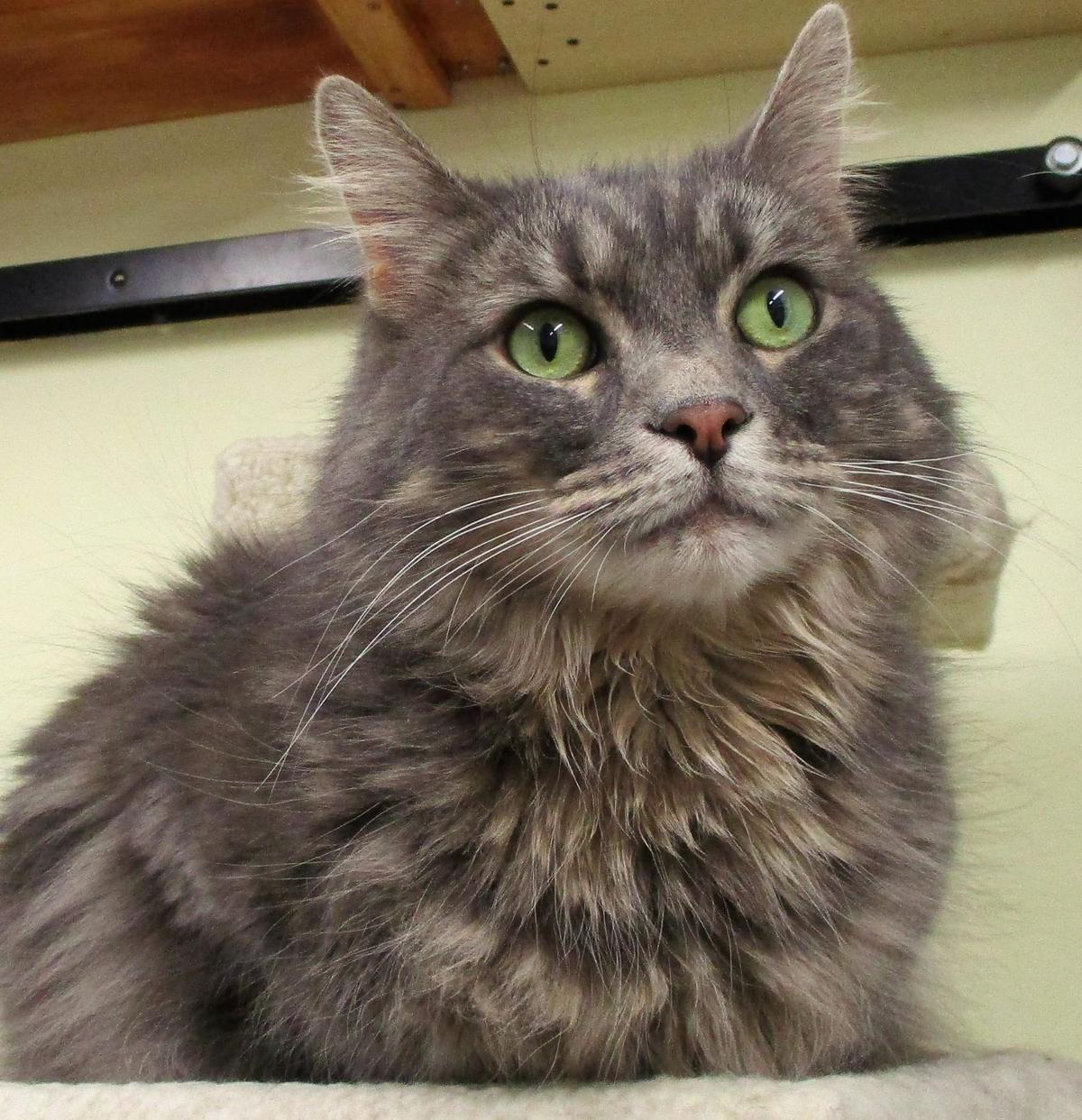 Every cat has a story at Torrington's Kitty Quarters