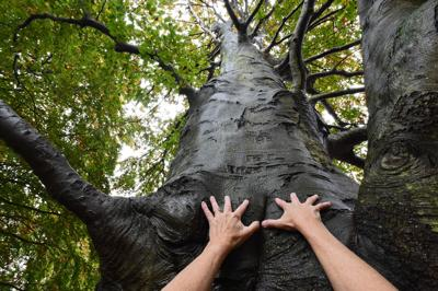 Randall Beach: People, let's stand up for our trees