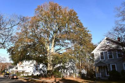 Randall Beach: Readers stand tall for our trees