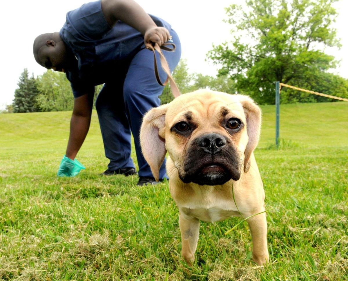 The scoop on dog cleanup under new plastic bag law