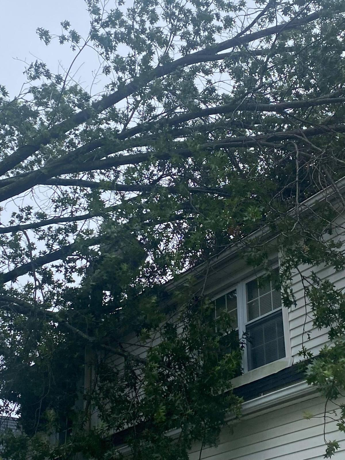 'It was so crazy': Large tree falls across Watertown restaurant during Henri