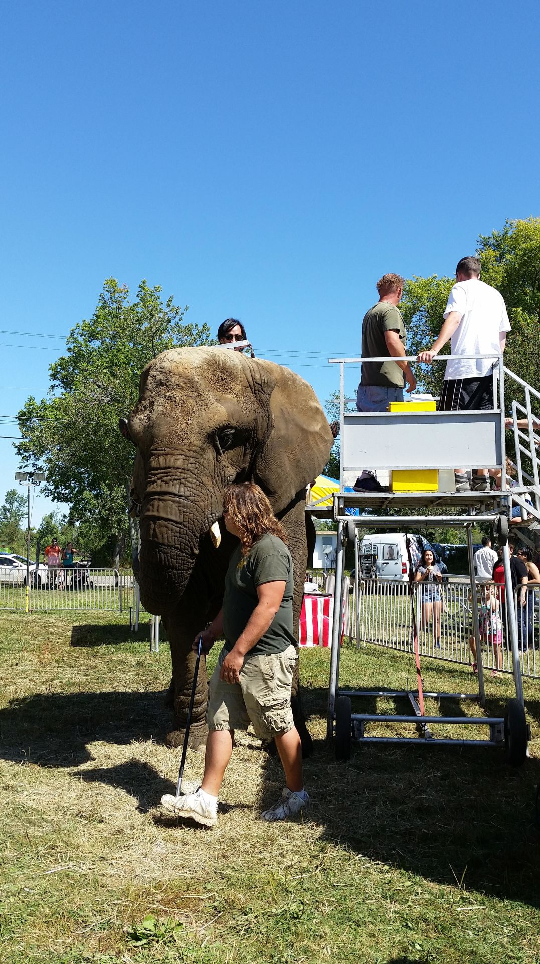 Activists vow to continue efforts to free Goshen elephants after 1 dies