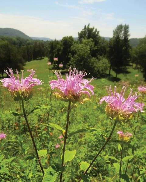 The Ecology of the Farmscape: Research Critical to Long-Range Health of Region