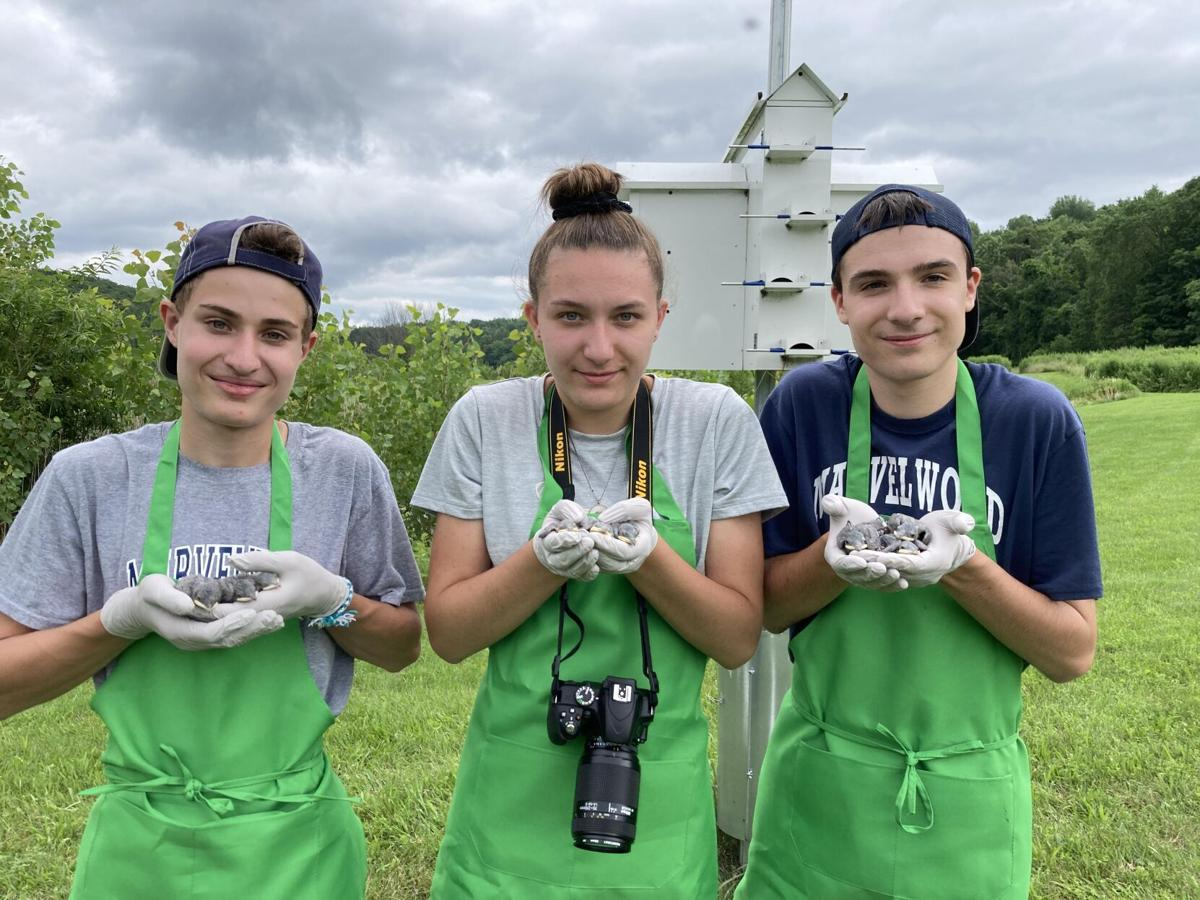 'Training for a potential career in conservation': Kent Land Trust interns get hands-on experience