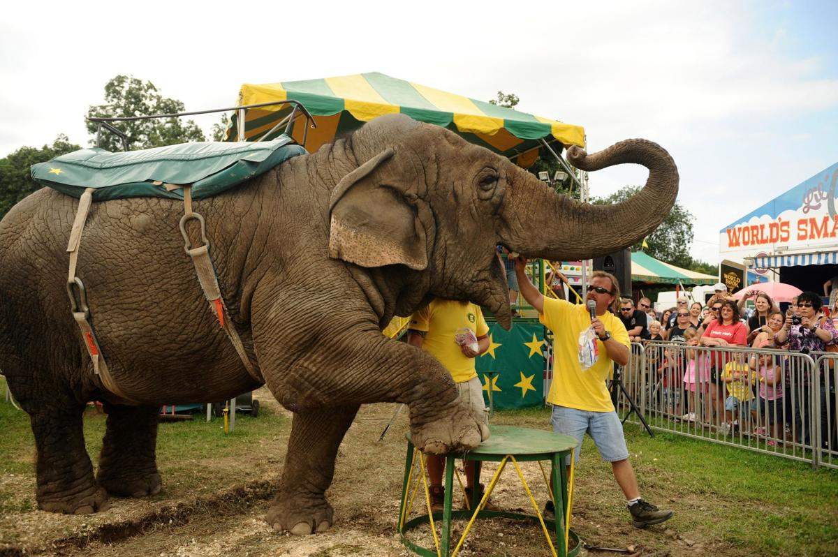 Humane Society calls for release of CT farm's last elephant