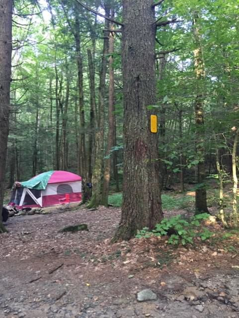 Early indications: Demand for summer campsites in CT will be high