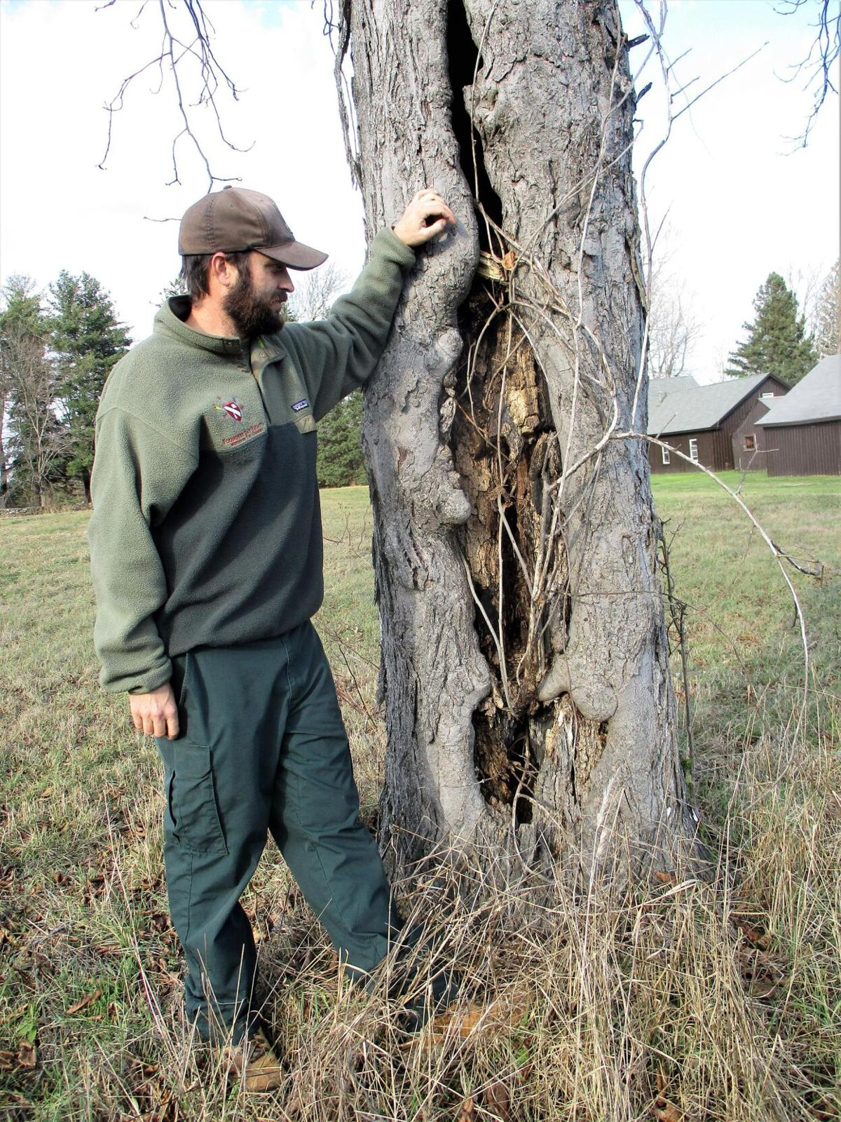 In Litchfield, Friends of Topsmead set up fund to replace dead trees