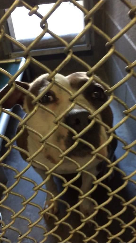 CT animal experts: There's never a good reason to abandon a pet