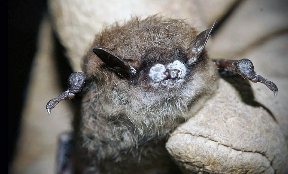 DEEP official: It could take decades to revive CT's bat population