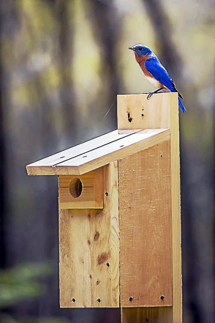 Bluebird Nest Box Building Workshop Hosted At Flanders