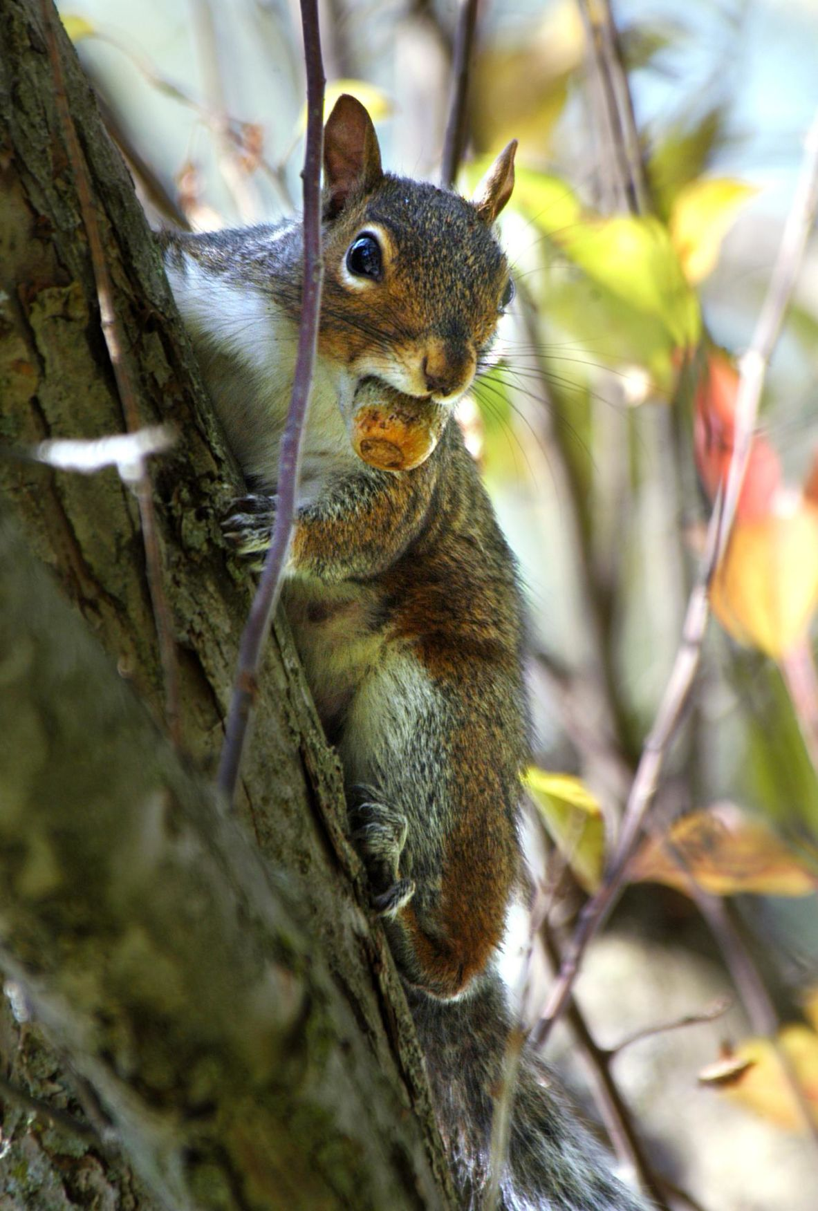 Robert Miller: How squirrels and oaks help each other
