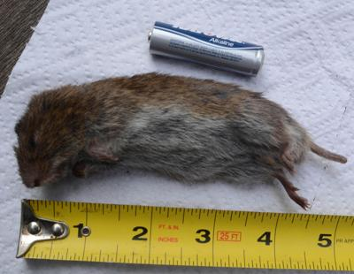 Robert Miller: What was the critter in the mousetrap?