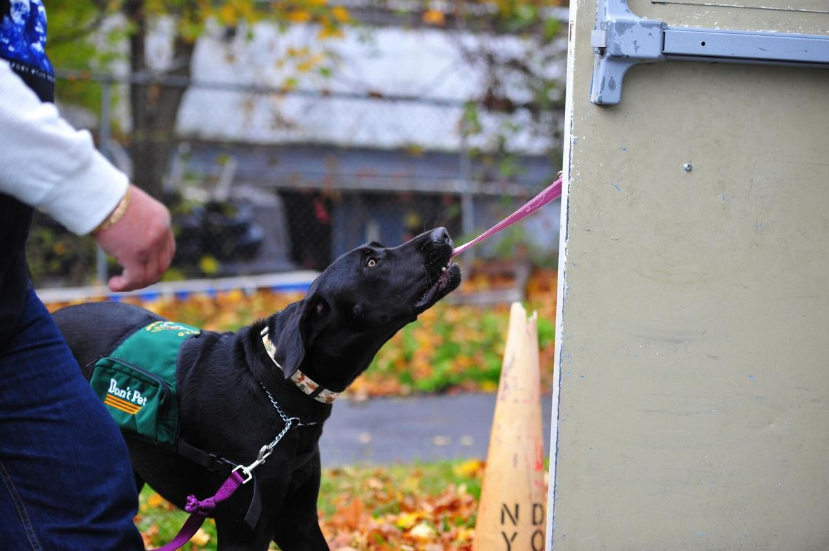 Winsted service dog training facility hosting open house