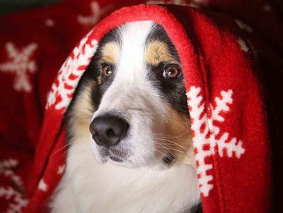 Pet Talk - Emergency Fur-st Aid for Pets