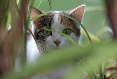 Pet Talk - Eating Your Greens: The Basics of Cat Grass