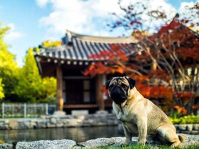 Pet Talk - Bone Voyage: International Travel With Pets