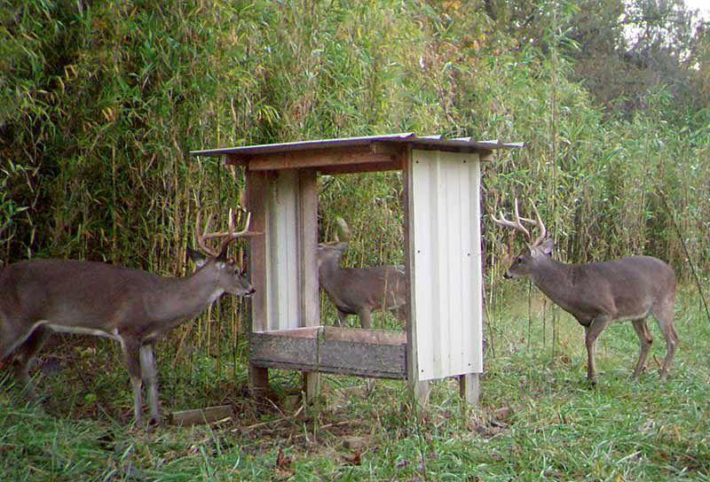 Bait Privilege License Opens Opportunities for Deer Hunters