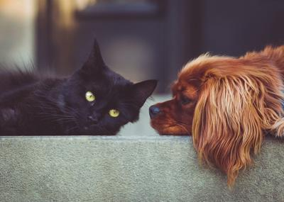 Pet Talk - When to be Concerned about Coronavirus with Your Pet