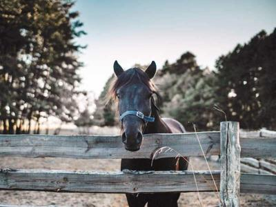 Pet Talk - Taking A Raincheck On Equine Rain Rot