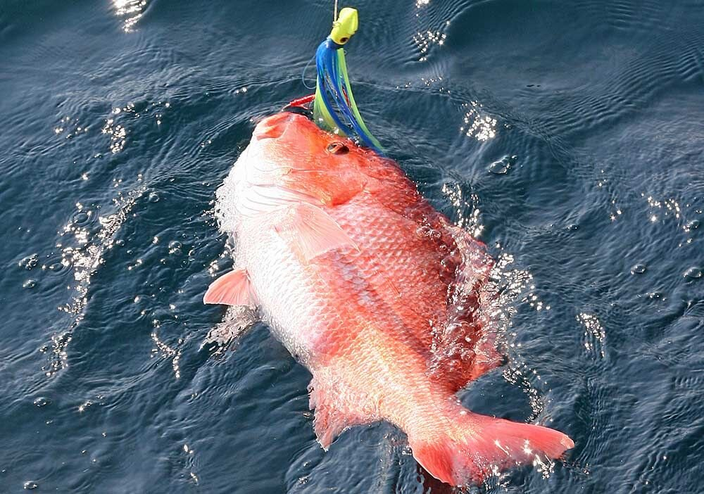 Private Anglers To Get One More Opportunity at Red Snapper