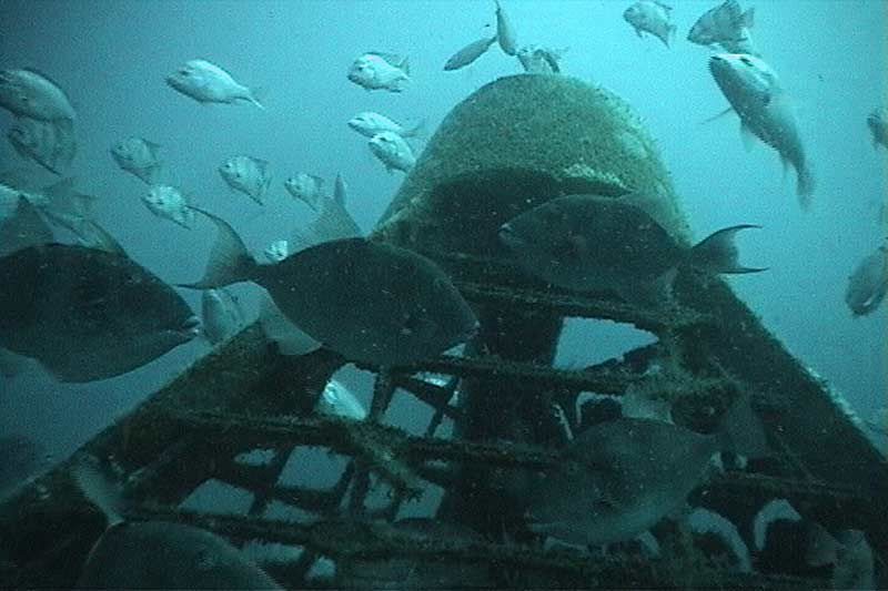 Alabama Leads Way with Artificial Reef Program