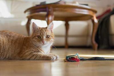 Pet Talk - Don't Sugarcoat It: The Facts of Feline Diabetes