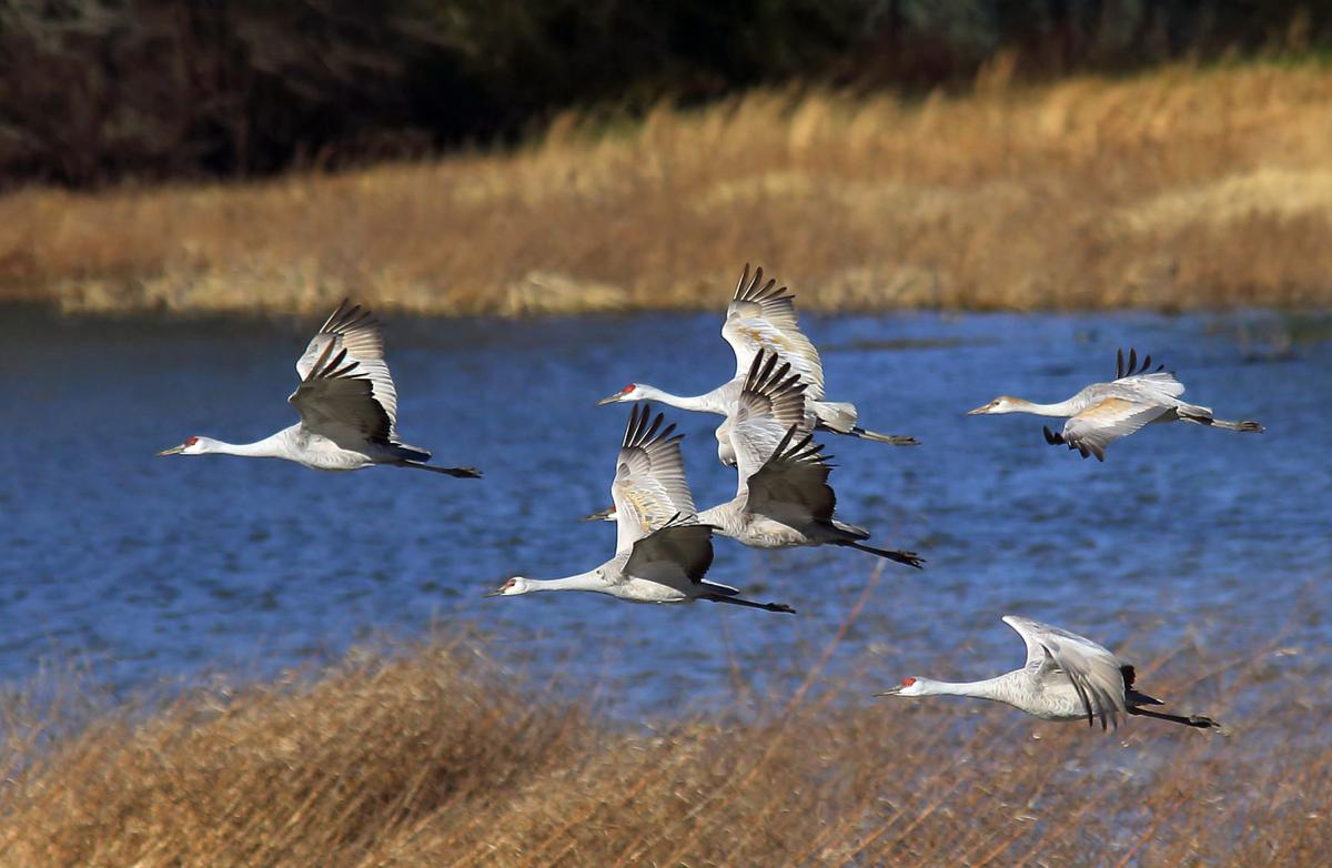 Military Active Duty, Veterans Get Extra Waterfowl Hunting Days