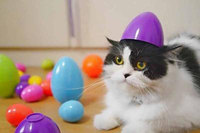 Pet Talk - Hop To It: Tips For A Pet-Safe Easter
