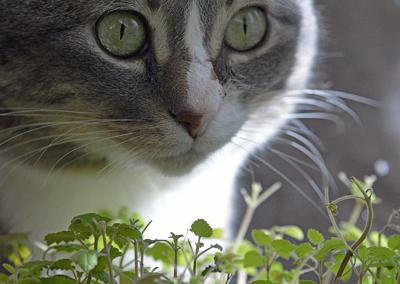 Pet Talk - Feline Fine: The Benefits of Catnip