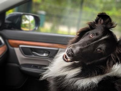 Pet Talk - Bark Voyage: Traveling With Pets
