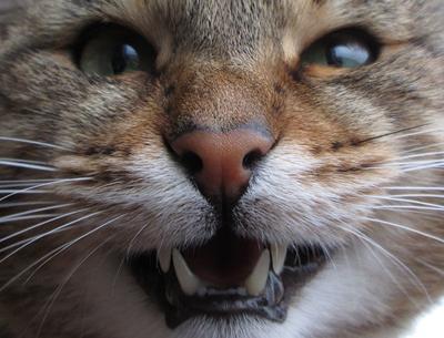 Pet Talk - Don't Brush Off Your Cat's Dental Health