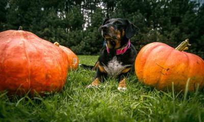 Pet Talk -  Tricky Treats: Protecting Your Pet from a Halloween Scare