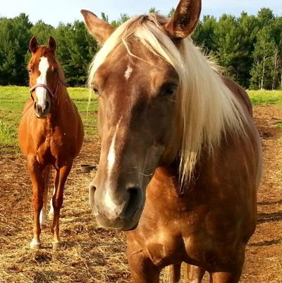 Pet Talk - What to Know About Equine Osteoarthritis